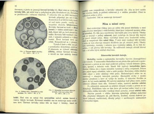 Pastejrik UstrojnaChemieTelovedaZdravovedaGeologie 1936 Stránka 15