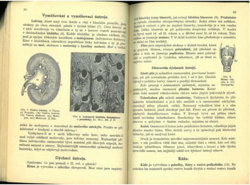 Pastejrik UstrojnaChemieTelovedaZdravovedaGeologie 1936 Stránka 16
