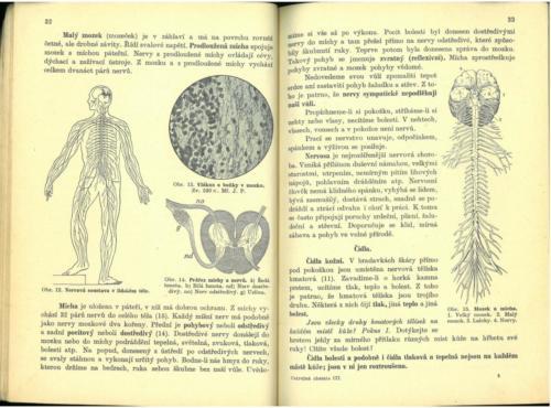 Pastejrik UstrojnaChemieTelovedaZdravovedaGeologie 1936 Stránka 18