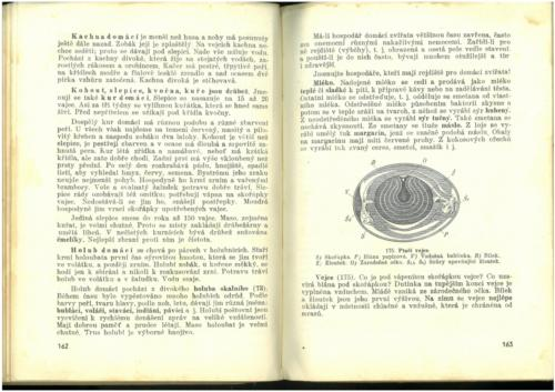 Pastejrik PrirodovedaProObecneSkoly(SestySedmyAOsmyRokSkolni) 1937 Stránka 083