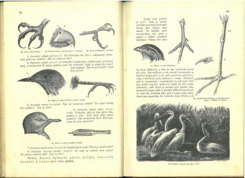 Pokorny-Rosicky PrirodopisProSkolyMestanske TretiStupen 1899 Stránka 32