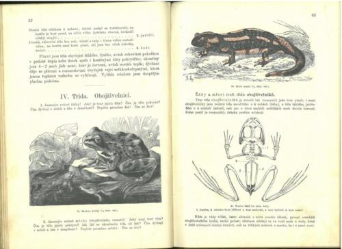 Pokorny-Rosicky PrirodopisProSkolyMestanske TretiStupen 1899 Stránka 37